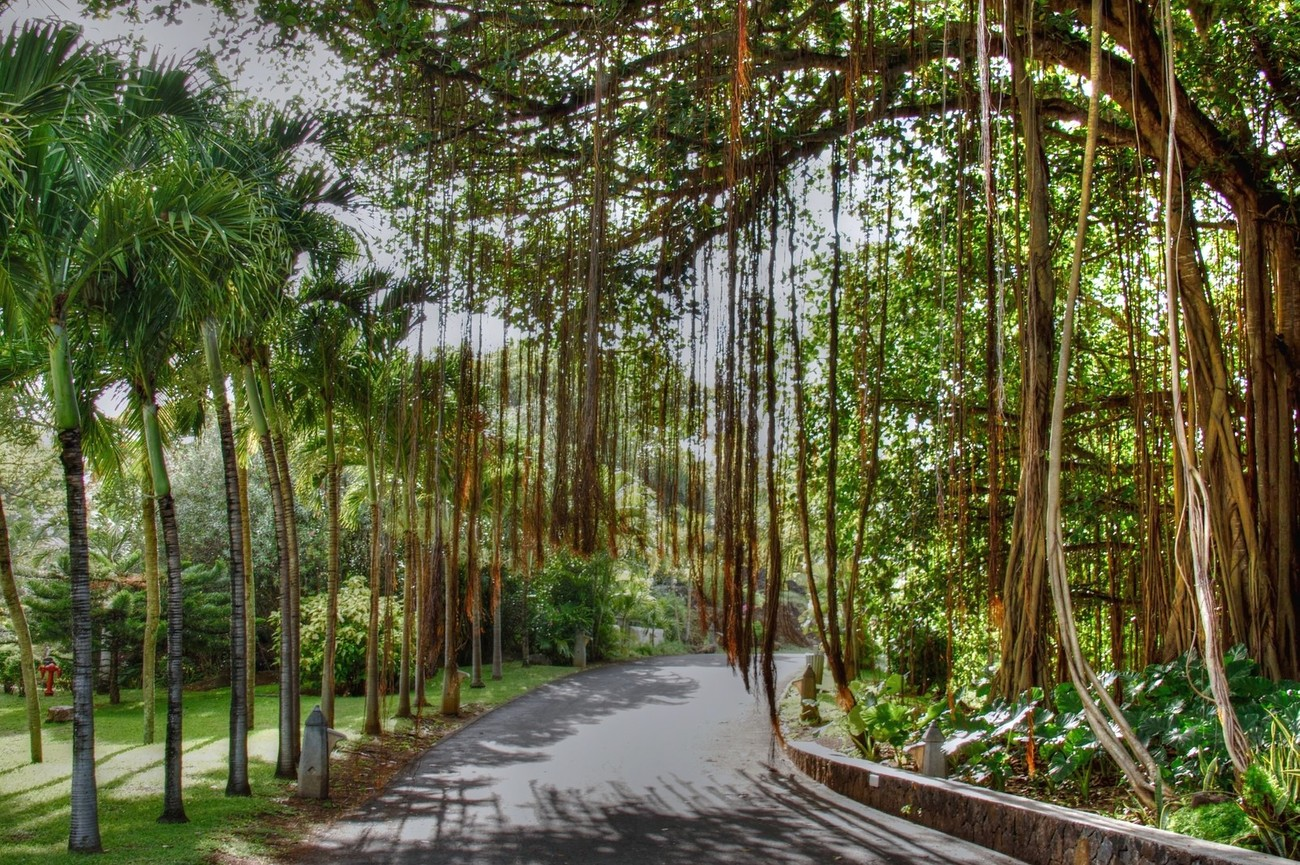 The Mauritius Collection - Banyan Tree at Lux Grand Gaube