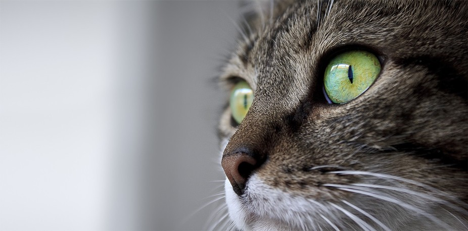 My old female cat : Milo !