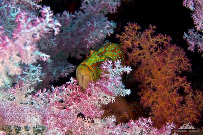 Hiding In The Coral
