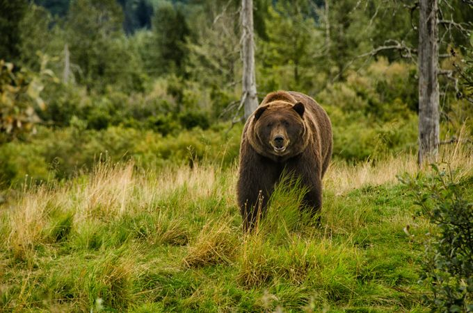 Smiling Bear by DariusPeckus - Bears Photo Contest