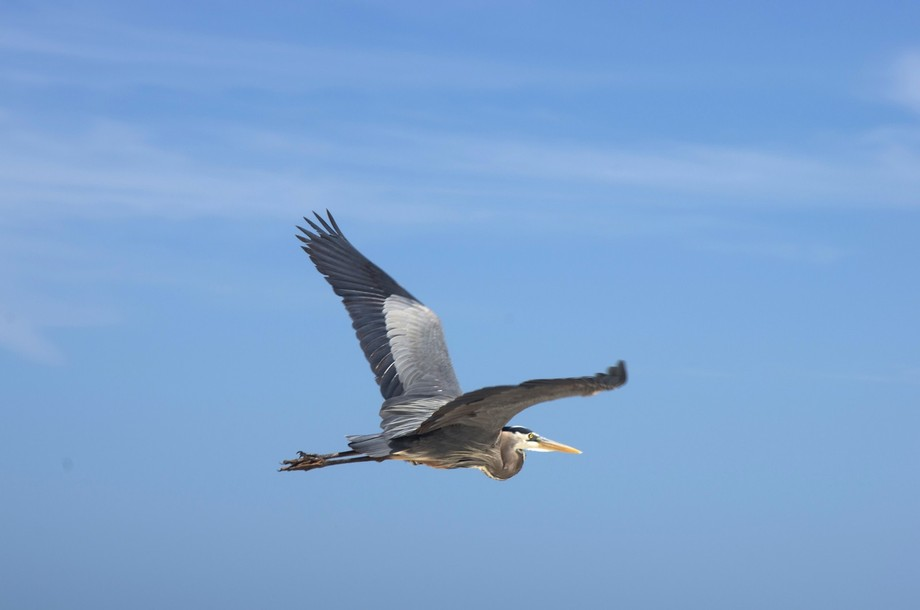 I loved the moment the bird took to flight.  They are so amazing.  Made my trip come alive.