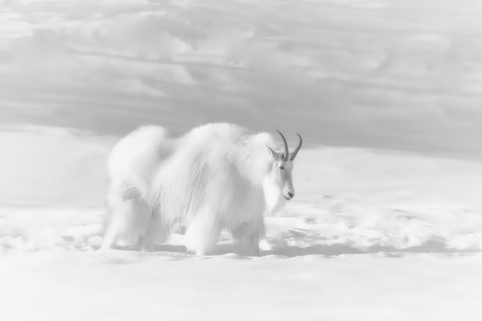 white out by Andre11 - Winter Wildlife Photo Contest