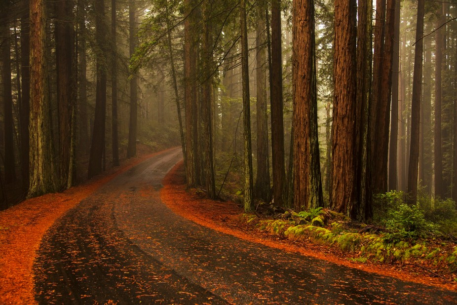 A foggy afternoon in October at the top of Mt. Tamalpais, Marin, California.