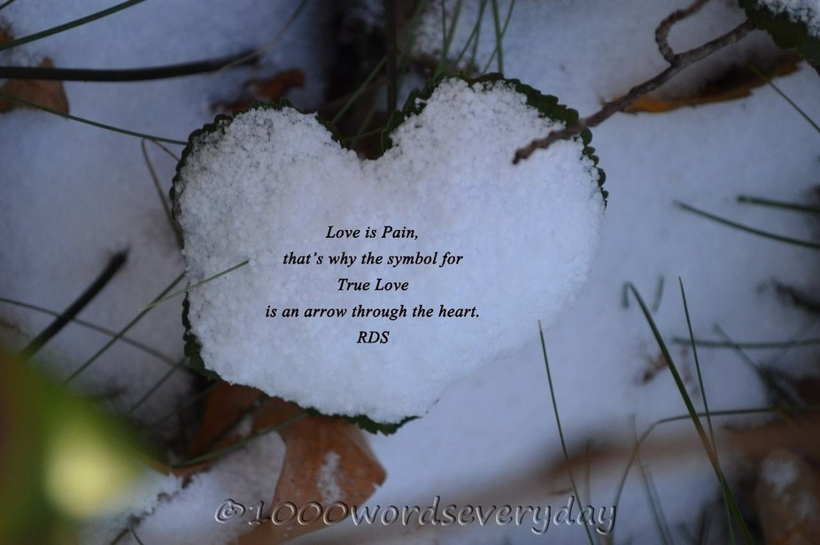 Saw this heart shaped leaf covered with snow and after closer inspection of my shot did I notice ...