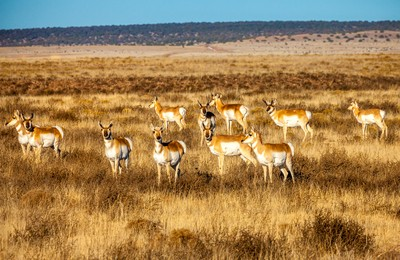 herd Northern New Mexico Winter 2015