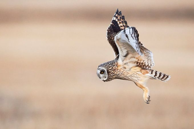 Owl Prowl by JestePhotography - Animals And Rule Of Thirds Photo Contest