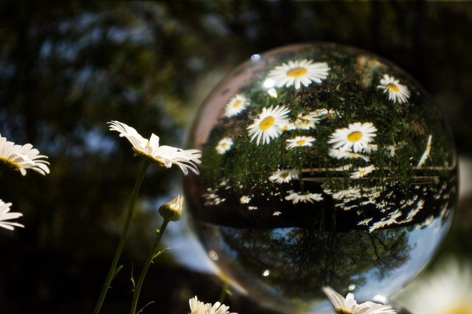 I love using the crystal sphere as a photography, this is the first time I thought about using to...