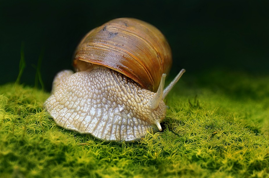 Snail on a rainy day in the mountains.
