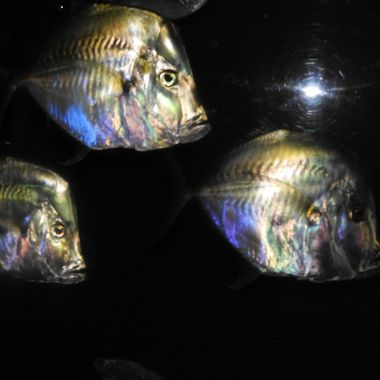 Took this at the zoo with a flash & was surprised at how the colors reflected off of the fish scales!