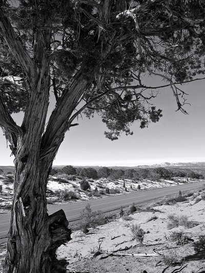 Tree and Highway