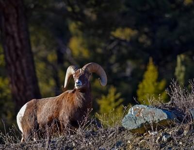 Big Horn West Yellowstone, Mt