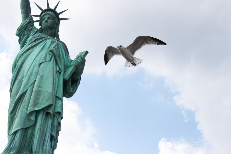 A gull flying around the Statue of Liberty.