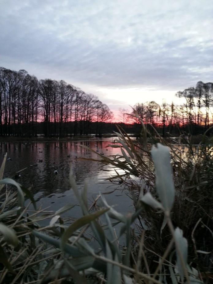 Reelfoot Lake Morning