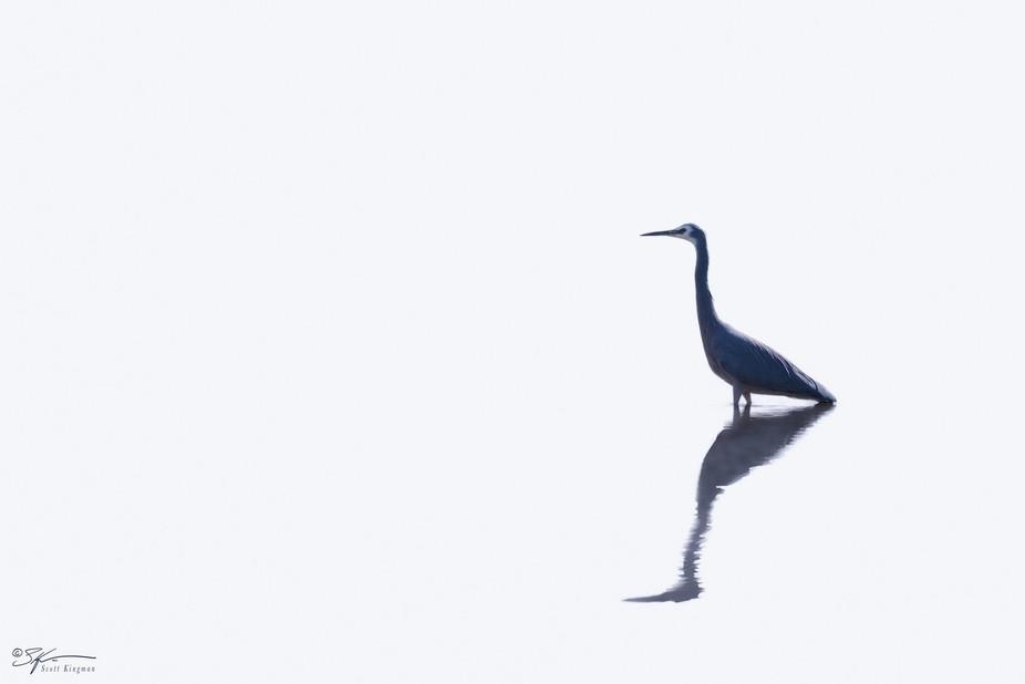 Overexposed Heron.