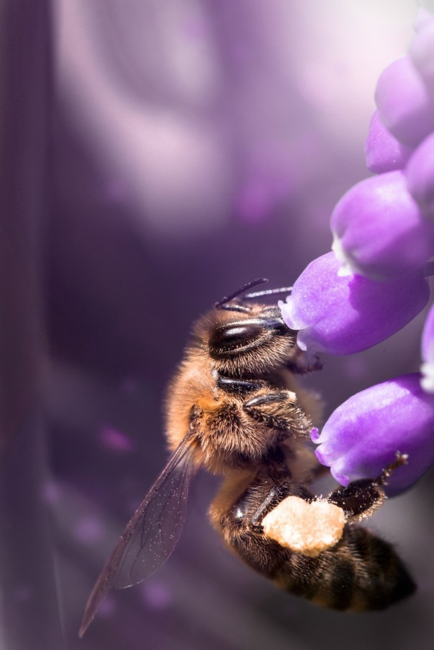 Busy Bee by dasBildprojekt - Disrupting Depth Photo Contest