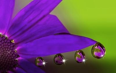 bleu flower