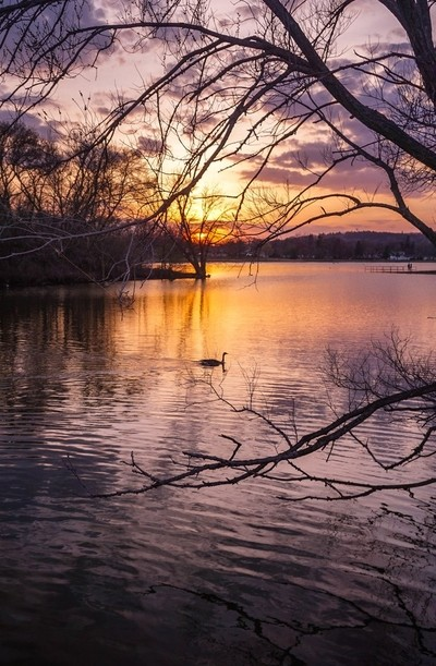 Sunset Duck