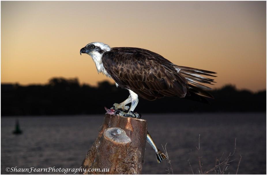 osprey fullview sml