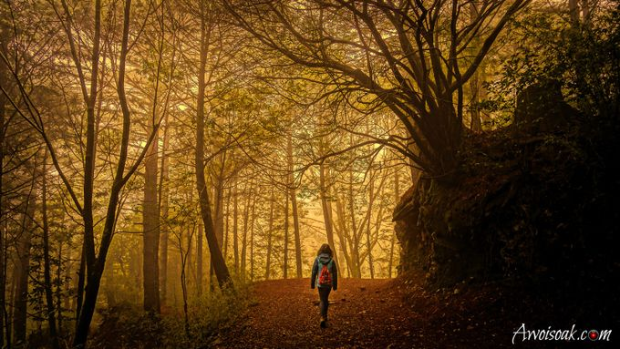 Into the Forest by awoisoak - Yellow Beauty Photo Contest