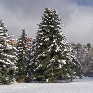 Morning snow at Rock Ledge Ranch.