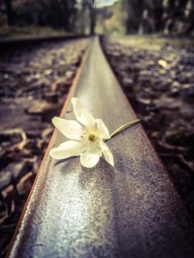 Spring on the tracks, Snowdonia
