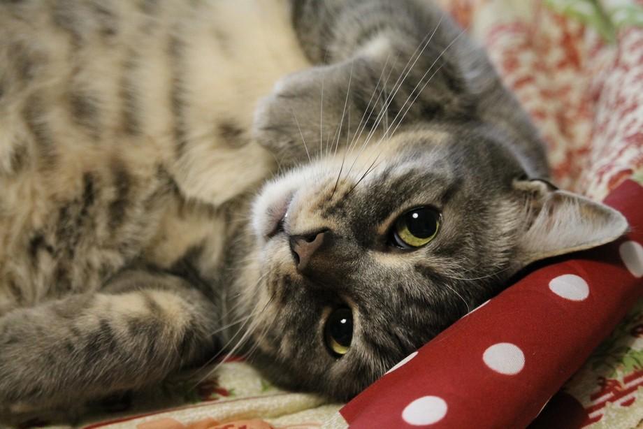 Cuddly kitty