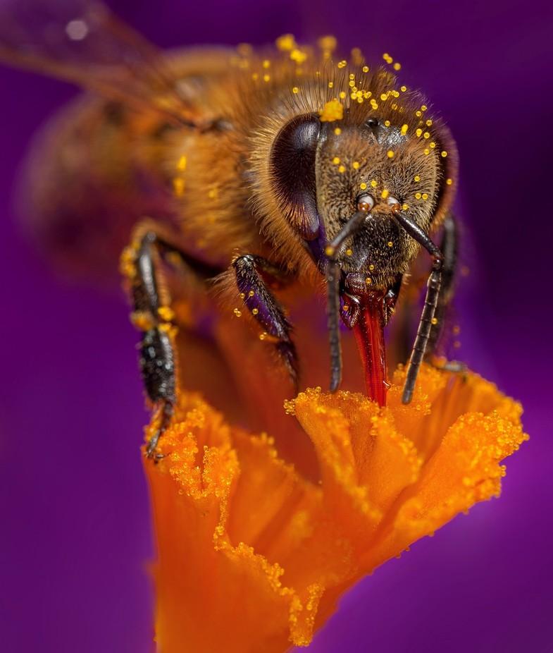 Bee in flower by nedkov - Freshmen 2016 Photo Contest Vol 2