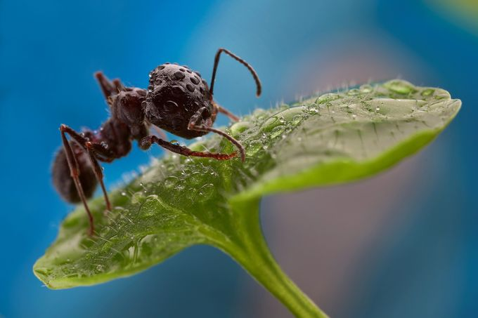 Ant on a leaf by nedkov - Get Wet Photo Contest