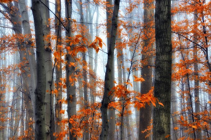 Autumn trees by angie_1964 - Fall 2017 Photo Contest
