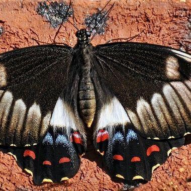 Pretty Flying Things Moth (3)
