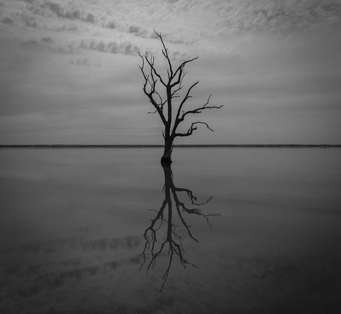 riverland-7935 by shaneconnelly - Tree Silhouettes Photo Contest