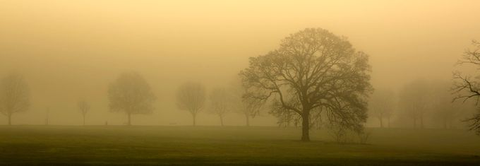 EARTH DAY SPECIAL  by Thomsonphotographer - Silhouettes Of Trees Photo Contest
