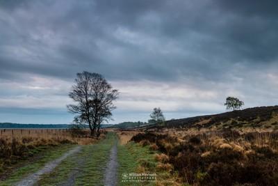 Green Cloudy Path