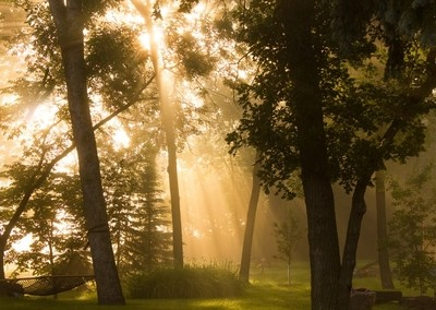 Fog Though Trees