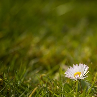 The Small World of a Daisy