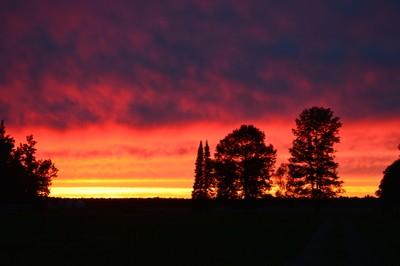 Sunset Trees on the Farm