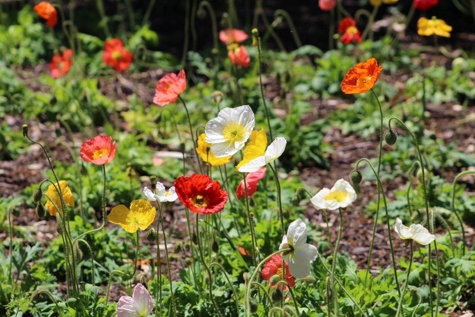 Colorful Flowers at Brookgreen Gardens, SC