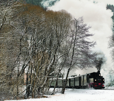 Snow, Steam and Trees