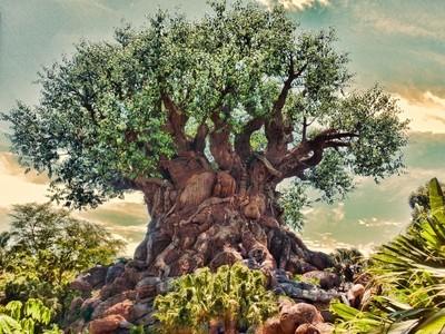 The Tree Of Life in The Animal Kingdom at Walt Disney World