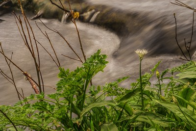 Flower By the River