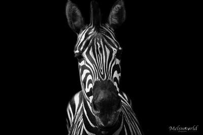 Black & white life