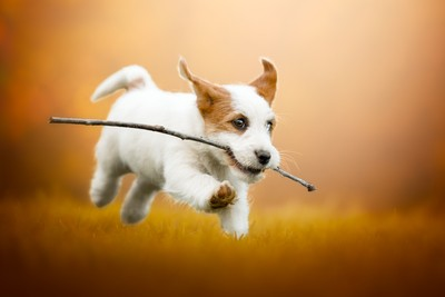 Happiness is... running with a stick!!