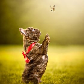 Here this puppy is trying to be a friend of this butterfly , LOL
