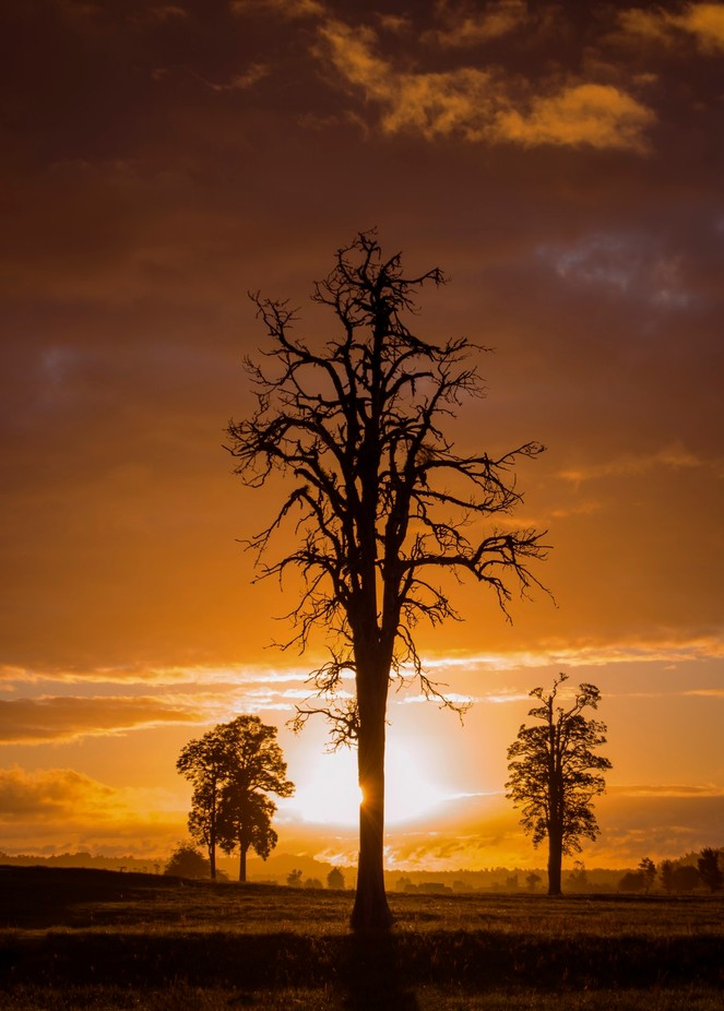 Sunset by tanyasalteranderson - Tree Silhouettes Photo Contest