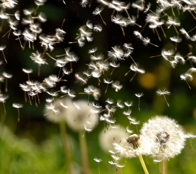 Spring breeze  by Eagle_Summit - Wind In Nature Photo Contest