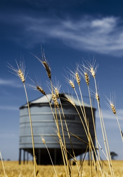Wheat and the Silo