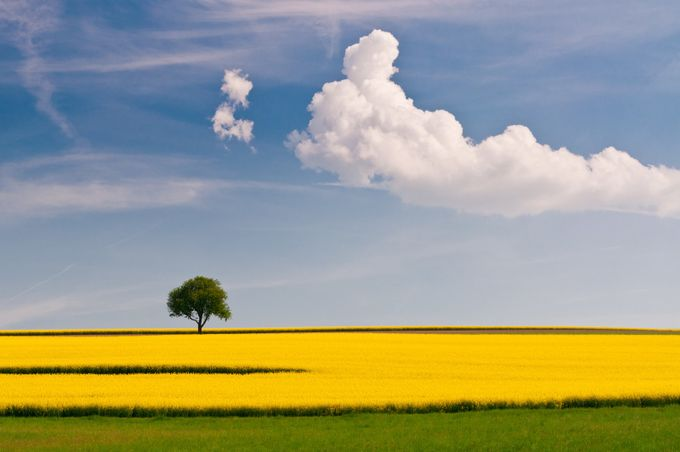 tree by GraceM - Rule Of Thirds In Nature Photo Contest