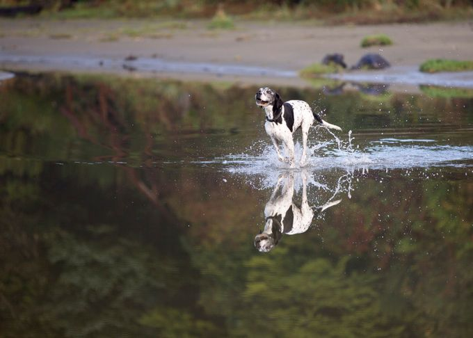 Joy of Running Unleashed by TrekLightly - Animals And Water Photo Contest