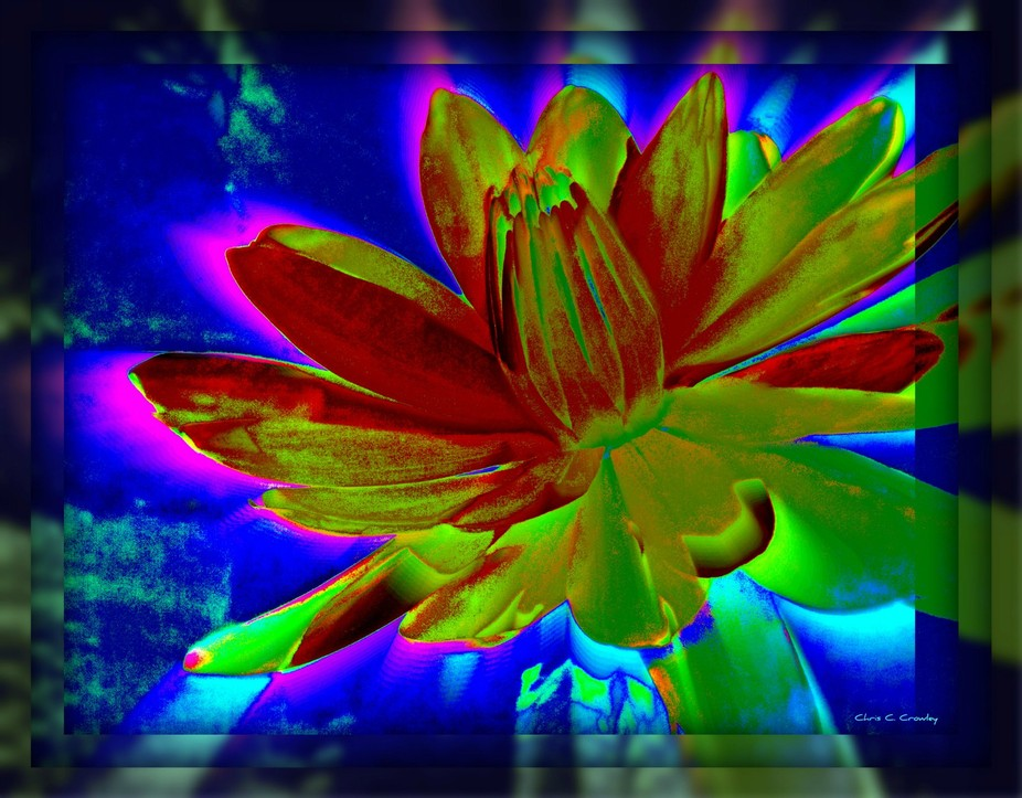The wildest of all of my waterlily abstracts, I wanted this one to have a dimensional, neon effec...