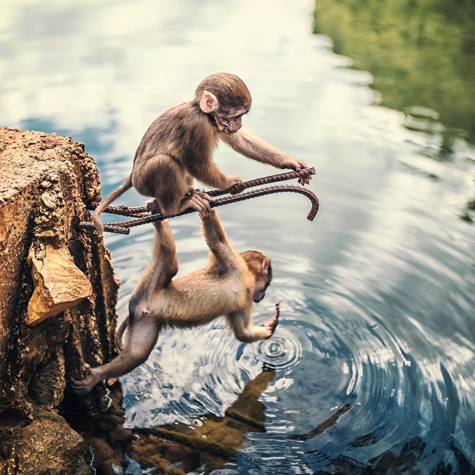 """playing"" by sebastianodamiri - Wildlife Photo Contest 2017"